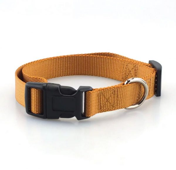 orange pet collars